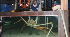 The spider crab weighs 15 kilo's...