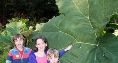 Giant leaf at Abbotsbury
