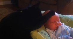 cat soothes baby