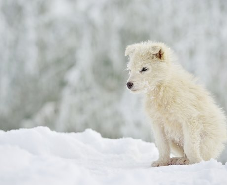 A white puppy in the snow