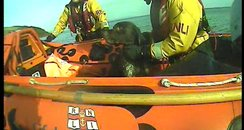 Dog rescue from South Devon cliff