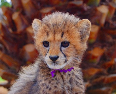 Cutest Pictures Of The Week - 6 March 2013Really Cute Baby Cheetahs