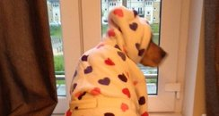 Dog in a dressing gown