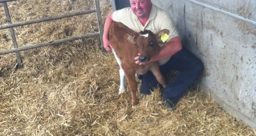 'Royal' Cow born at Puxton