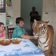 The Family That Lives With Tigers