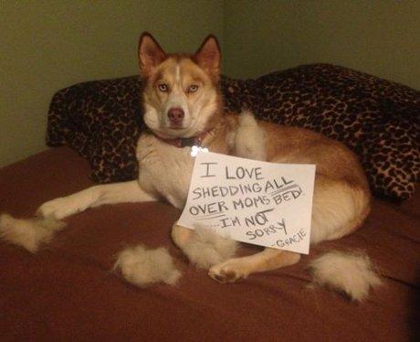 Dog Shaming Best Of Video