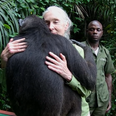 wounda the chimpanzee hugs dr goodall