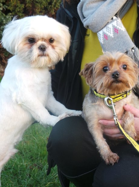 Sonny (left) and Sally - Dogs Trust Ballymena