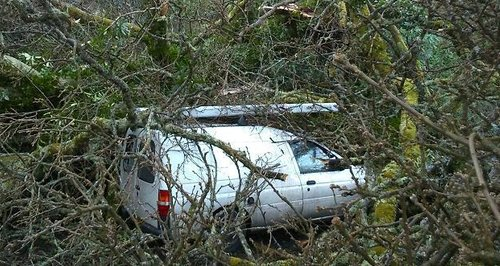 Van protected by branches from fallen tree