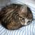 Image 1: A kitten asleep on a bed