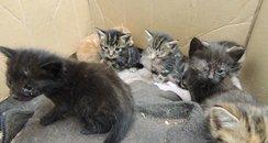 Wisbech Abandoned Kittens 1
