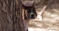 puppy dog wearing a hat