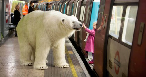 Polar Bear on the Tube