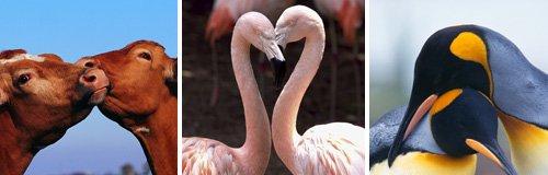 animals in love canvas