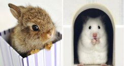 Cute baby animals sitting in things