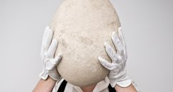 Elephant Bird Egg Auction at Sotheby's