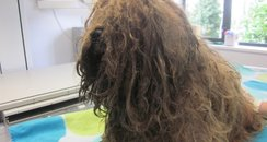 New Forest vet fined matted fur dog