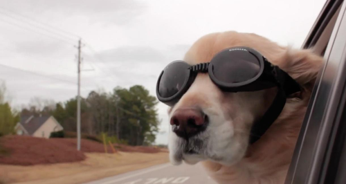 Storyful Heart: Dog goggles