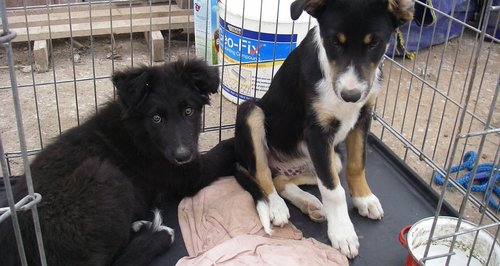 Puppies abandoned in Colwyn Bay